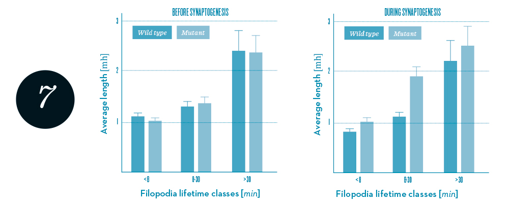 Statistics of filopodia dynamics extracted from 4-D microscopy data.