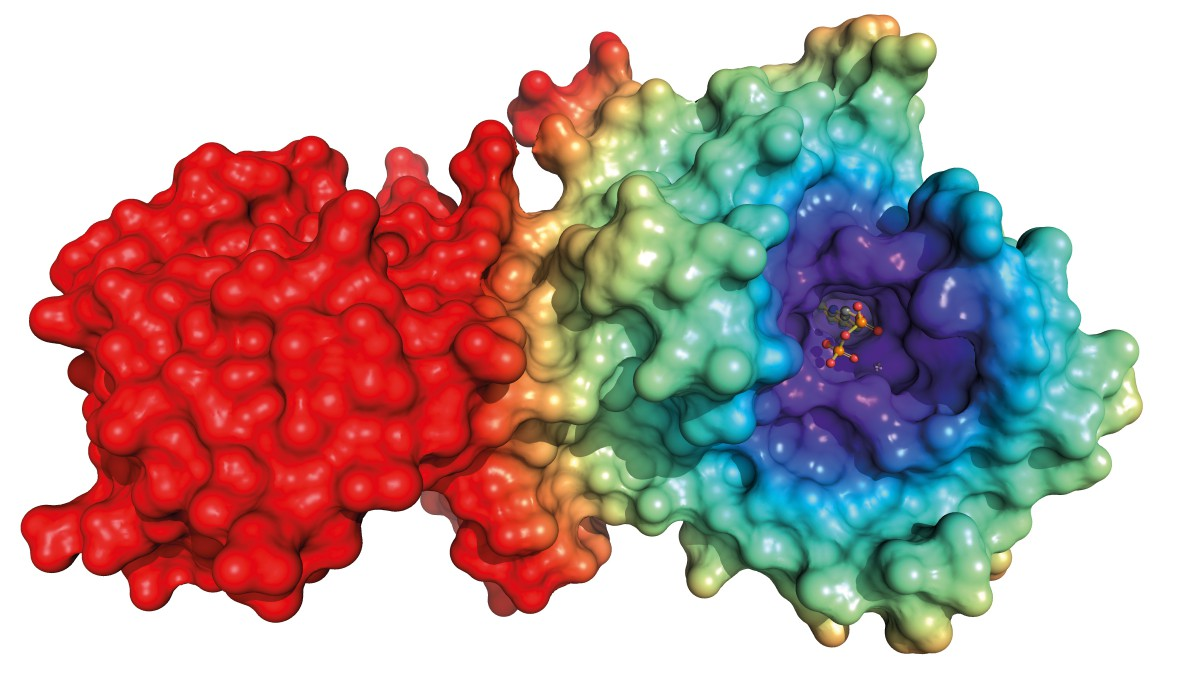 Often many simulations are performed with very similar molecular systems. Sometimes only one side group of a binding molecule varies, in this case in the violet region.