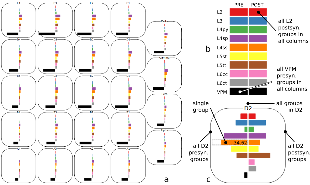 (2) The Cortical Column Connectivity Viewer (CCCV, a) is an interactive tool to explore synaptic connectivity within and between cortical columns. The layout of columns mimics the anatomical barrel field, providing spatial context. The colored bars show the number of synapses each selected presynaptic group (left side) shares with selected postsynaptic groups (right). Various selection options (b, c) allow efficient exploration.