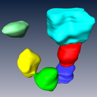 (c) The second step splits clusters of connected somata at their thin necks using marker-based watershed segmentation.