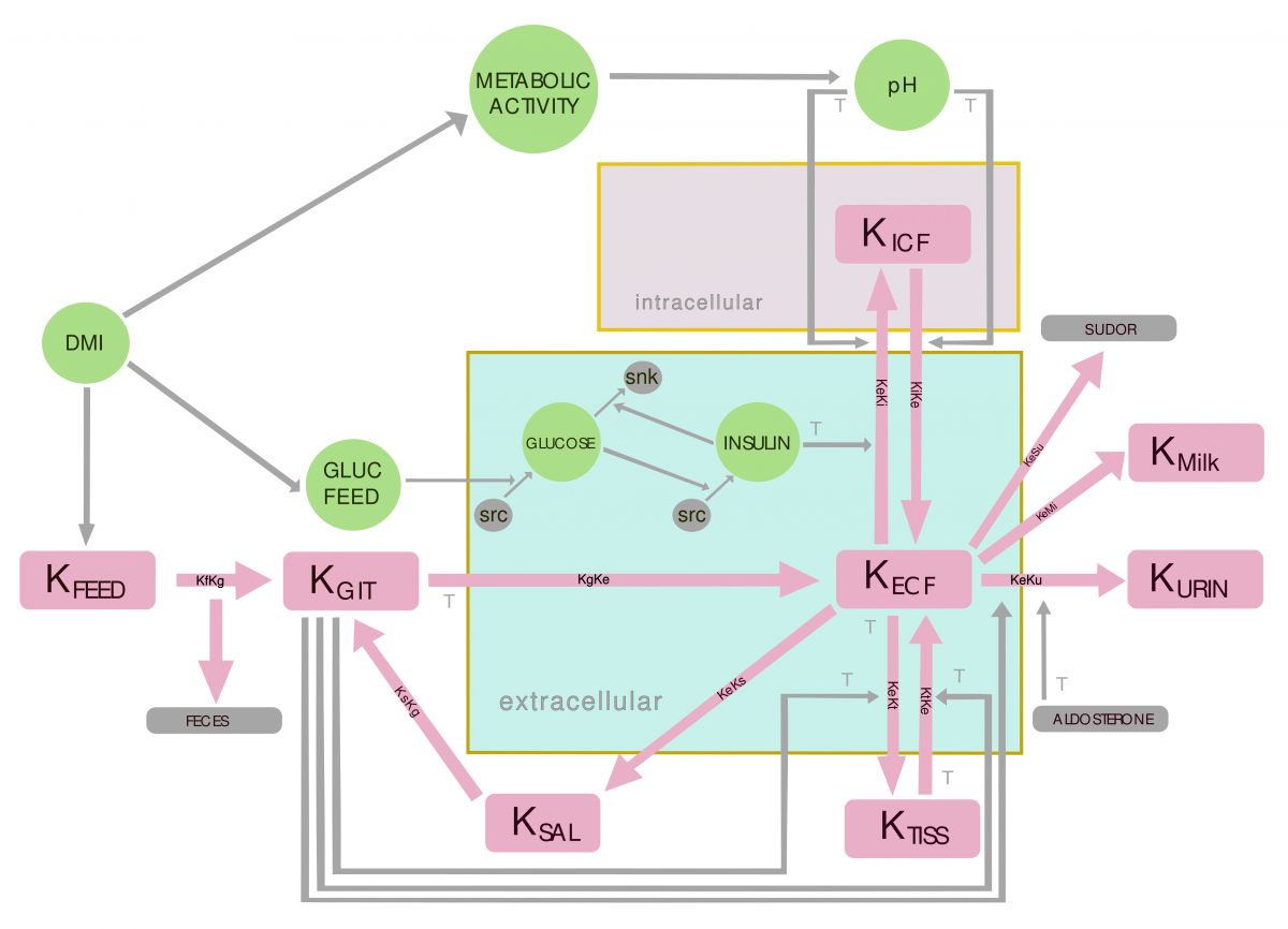 Flowchart for the Potassium Balance Model in the bovine